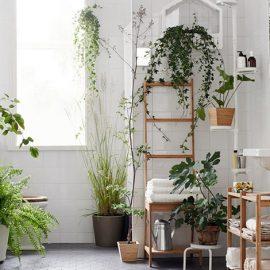Τα φυτά στο μπάνιο επανέρχονται ως τάση για την εσωτερική διακόσμηση, αρκεί να επιλέξετε τα κατάλληλα
