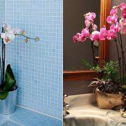 Οι ορχιδέες είναι μία υπέροχη επιλογή. Τα όμορφα άνθη τους δημιουργούν ένα αρμονικό σκηνικό στο μπάνιο σας