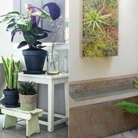 Αν έχετε χώρο, χρησιμοποιήστε επιπλάκια με διαφορετικά φυτά σε σχήμα και όγκο // Φυτά σαν πίνακας ζωγραφικής