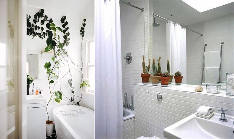 Τι θα λέγατε για ένα αναρριχώμενο φυτό; // Η εταζέρα του νιπτήρα ειδικά αν είναι σαν πάγκος δίνει πολλές δυνατότητες για τα φυτά σας
