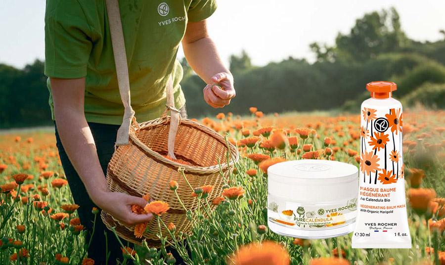 Η καλέντουλα είναι ένα άριστο επουλωτικό φυτό με πολύτιμα αιθέρια έλαια και θεραπευτικές αλλά και καλλυντικές ιδιότητες. Αναζωογονητική κρέμα ημέρας και νύχτας με καλέντουλα για ενυδάτωση και αντιγήρανση και όλους τους τύπους δέρματος // Mάσκα προσώπου για επανόρθωση. Χάρη στην οργανική καλέντουλα θρέφει την επιδερμίδα